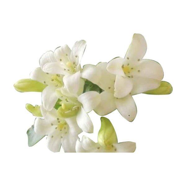kholisha-flower-honey